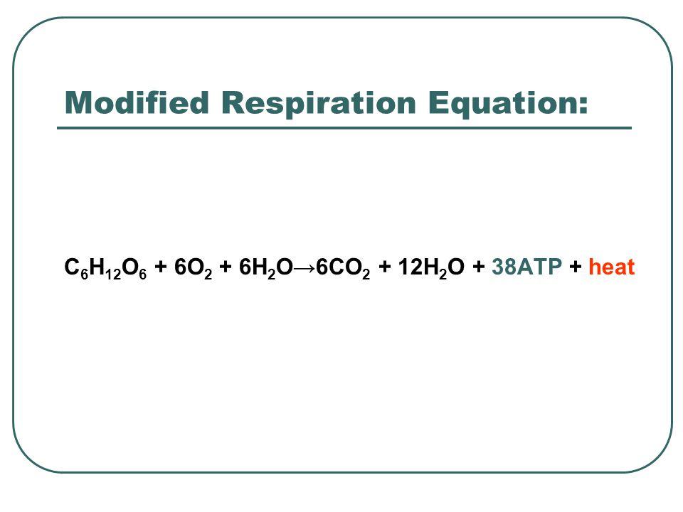 Modified Respiration Equation: C 6 H 12 O 6 + 6O 2 + 6H 2 O→6CO 2 + 12H 2 O + 38ATP + heat