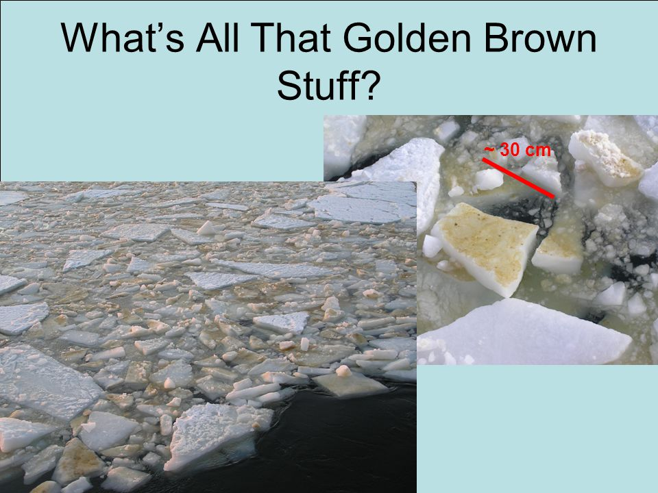 What's All That Golden Brown Stuff? ~ 30 cm