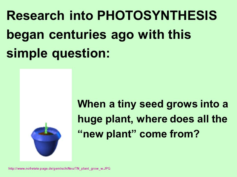 Research into PHOTOSYNTHESIS began centuries ago with this simple question: When a tiny seed grows into a huge plant, where does all the new plant come from.
