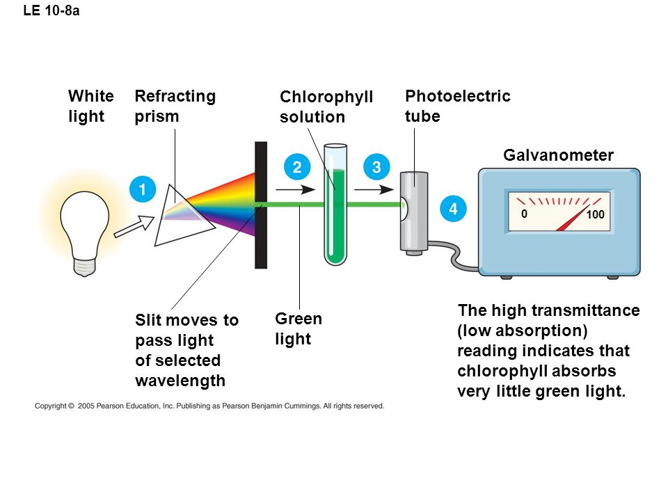 LE 10-8a White light Refracting prism Chlorophyll solution Photoelectric tube Galvanometer The high transmittance (low absorption) reading indicates that chlorophyll absorbs very little green light.