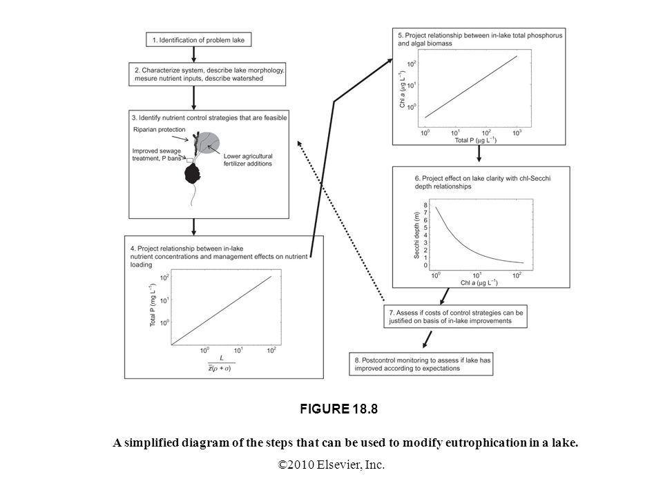 ©2010 Elsevier, Inc. FIGURE 18.8 A simplified diagram of the steps that can be used to modify eutrophication in a lake.