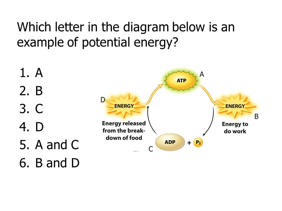 Which letter in the diagram below is an example of potential energy? 1.A 2.B 3.C 4.D 5.A and C 6.B and D A B C D