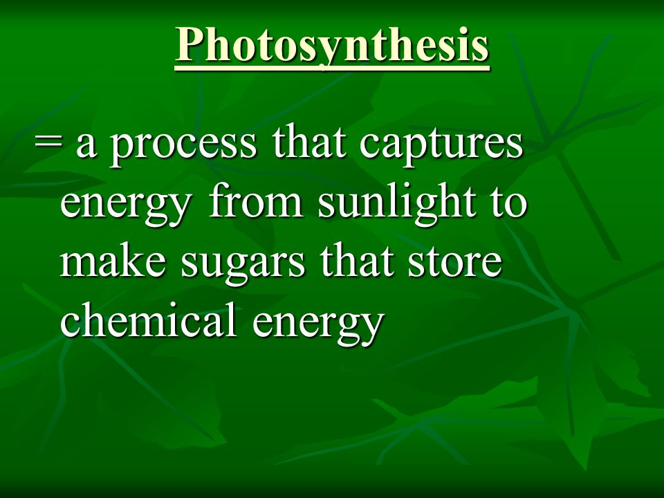 Photosynthesis = a process that captures energy from sunlight to make sugars that store chemical energy