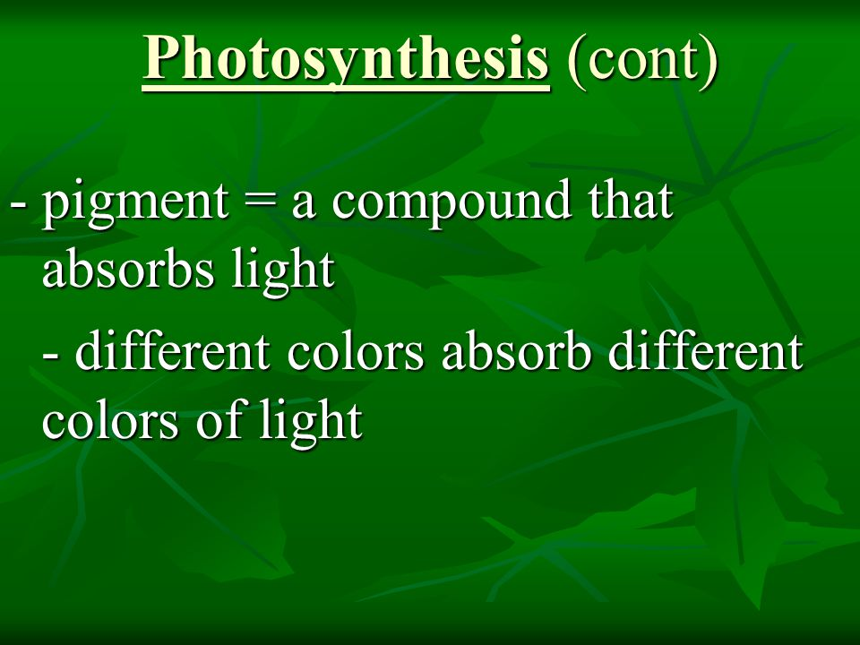 Photosynthesis (cont) - chlorophyll = a molecule in chloroplasts that absorbs visible light - two types: chlorophyll a (primary pigment) chlorophyll b (accessory pigment) - absorb mostly red and blue light - neither a nor b absorbs green light (this is why plants appear green – color is reflected)