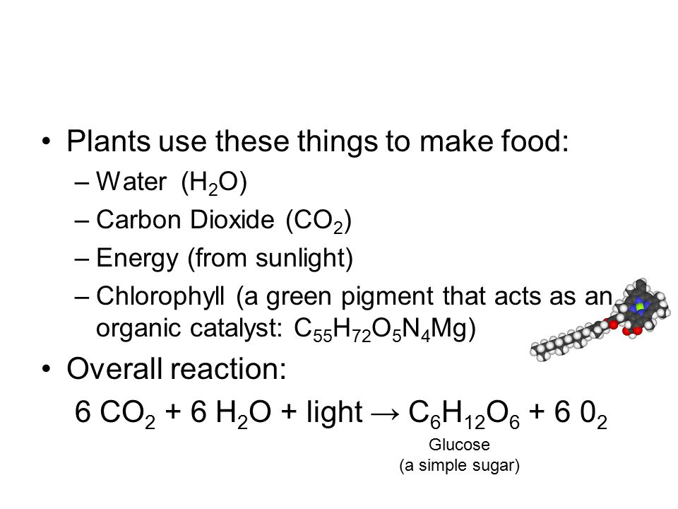 Plants use these things to make food: –Water (H 2 O) –Carbon Dioxide (CO 2 ) –Energy (from sunlight) –Chlorophyll (a green pigment that acts as an organic catalyst: C 55 H 72 O 5 N 4 Mg) Overall reaction: 6 CO 2 + 6 H 2 O + light → C 6 H 12 O 6 + 6 0 2 Glucose (a simple sugar)