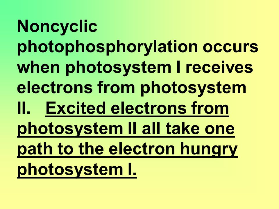 Noncyclic photophosphorylation occurs when photosystem I receives electrons from photosystem II.