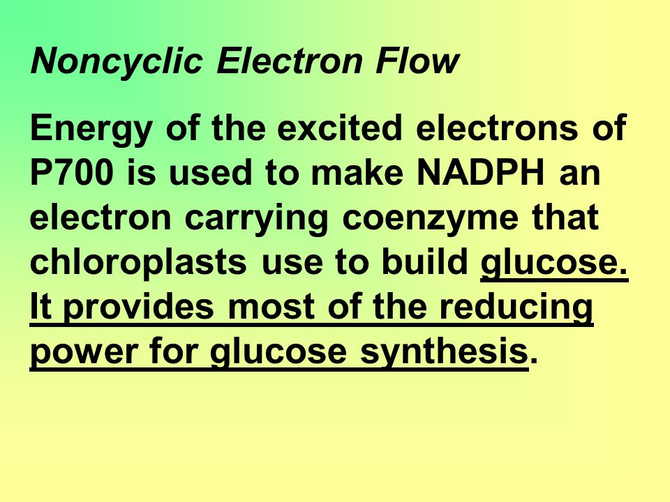 Noncyclic Electron Flow Energy of the excited electrons of P700 is used to make NADPH an electron carrying coenzyme that chloroplasts use to build glucose.