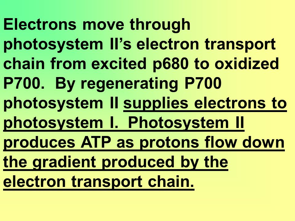 Electrons move through photosystem II's electron transport chain from excited p680 to oxidized P700.
