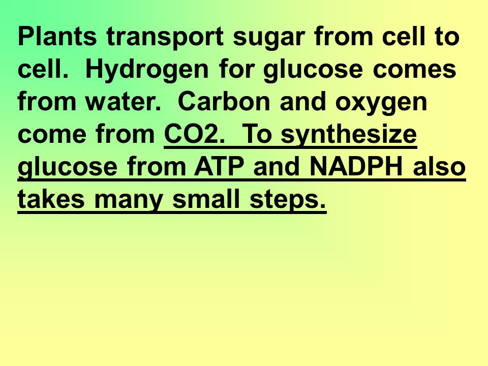 Plants transport sugar from cell to cell. Hydrogen for glucose comes from water.