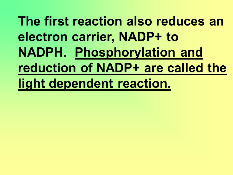 The first reaction also reduces an electron carrier, NADP+ to NADPH.