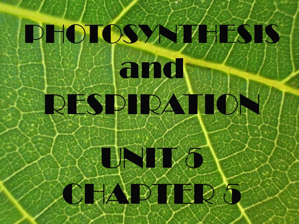 SECTION 1 Photosynthesis