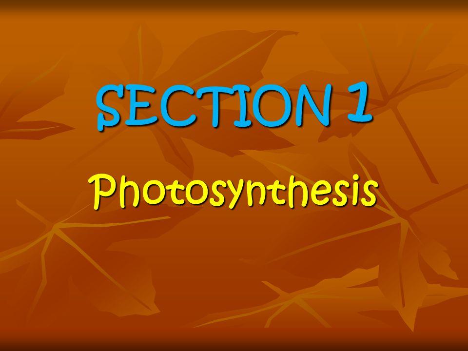 SECTION 2 Cellular Respiration