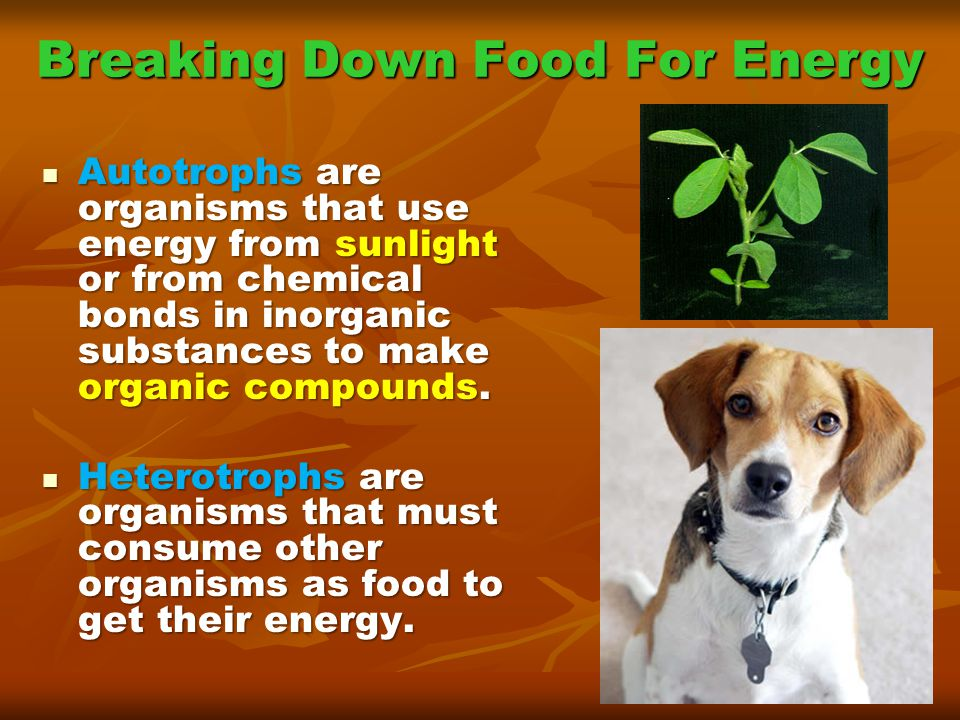 Photosynthesis: Stage 2 These proteins act as both ion channels as well as enzymes.