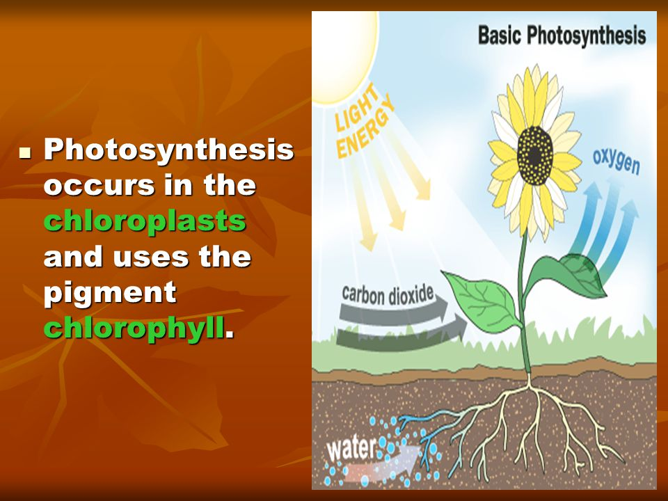 Photosynthesis The following chemical equation summarizes photosynthesis: The following chemical equation summarizes photosynthesis: 6H 2 O + 6CO 2 + light  C 6 H 12 O 6 + 6O 2 6H 2 O + 6CO 2 + light  C 6 H 12 O 6 + 6O 2 REACTANTS: water, carbon dioxide, light energy REACTANTS: water, carbon dioxide, light energy PRODUCTS: glucose, oxygen PRODUCTS: glucose, oxygen