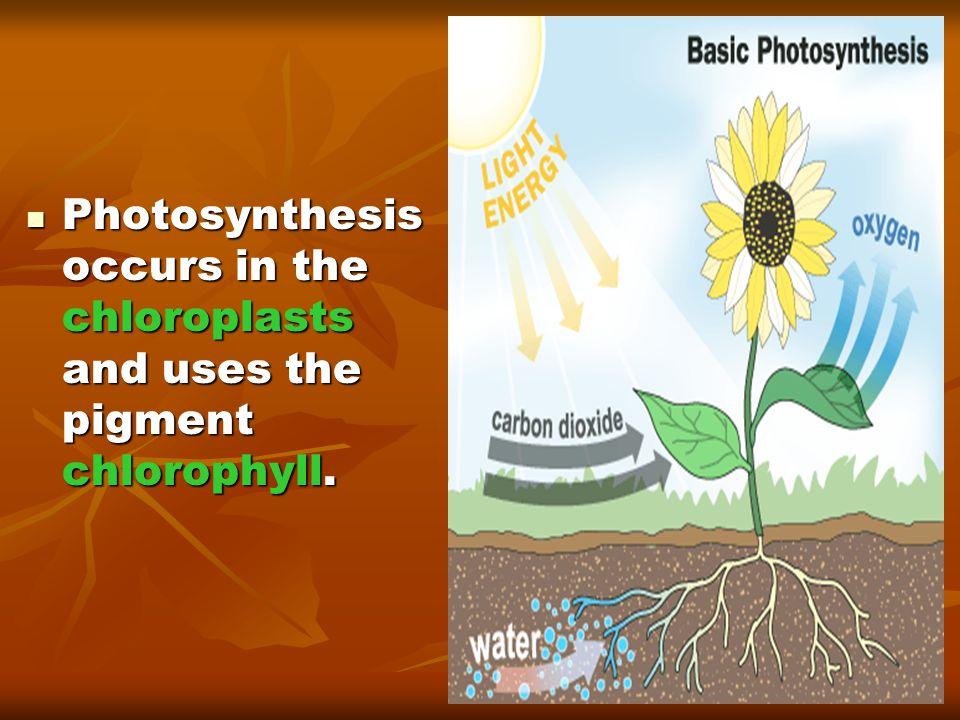 Lactic Acid Fermentation  Glycolysis occurs without oxygen.