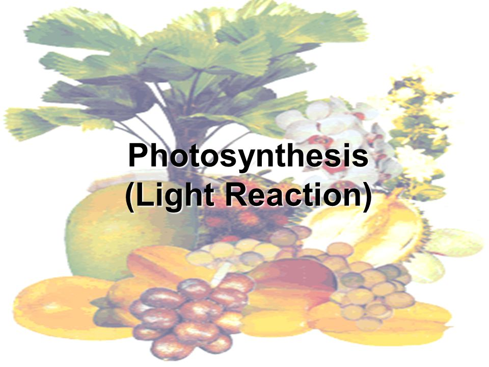 Photosynthesis (Light Reaction)