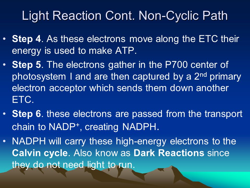 Light Reaction Cont. Non-Cyclic Path Step 4. As these electrons move along the ETC their energy is used to make ATP. Step 5. The electrons gather in t