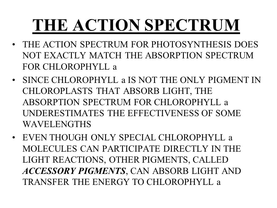 THE ACTION SPECTRUM THE ACTION SPECTRUM FOR PHOTOSYNTHESIS DOES NOT EXACTLY MATCH THE ABSORPTION SPECTRUM FOR CHLOROPHYLL a SINCE CHLOROPHYLL a IS NOT