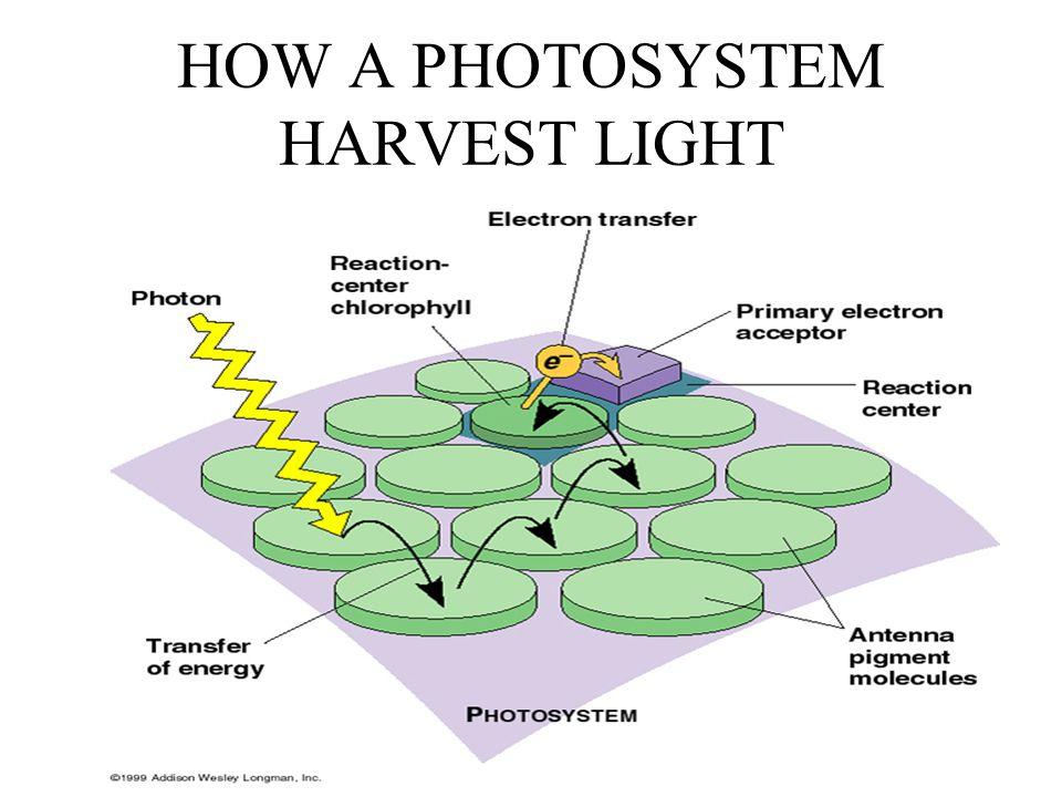 HOW A PHOTOSYSTEM HARVEST LIGHT