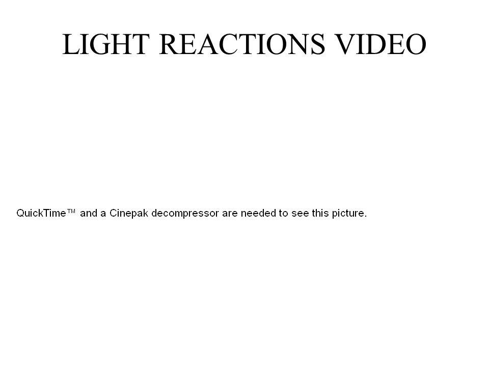 LIGHT REACTIONS VIDEO