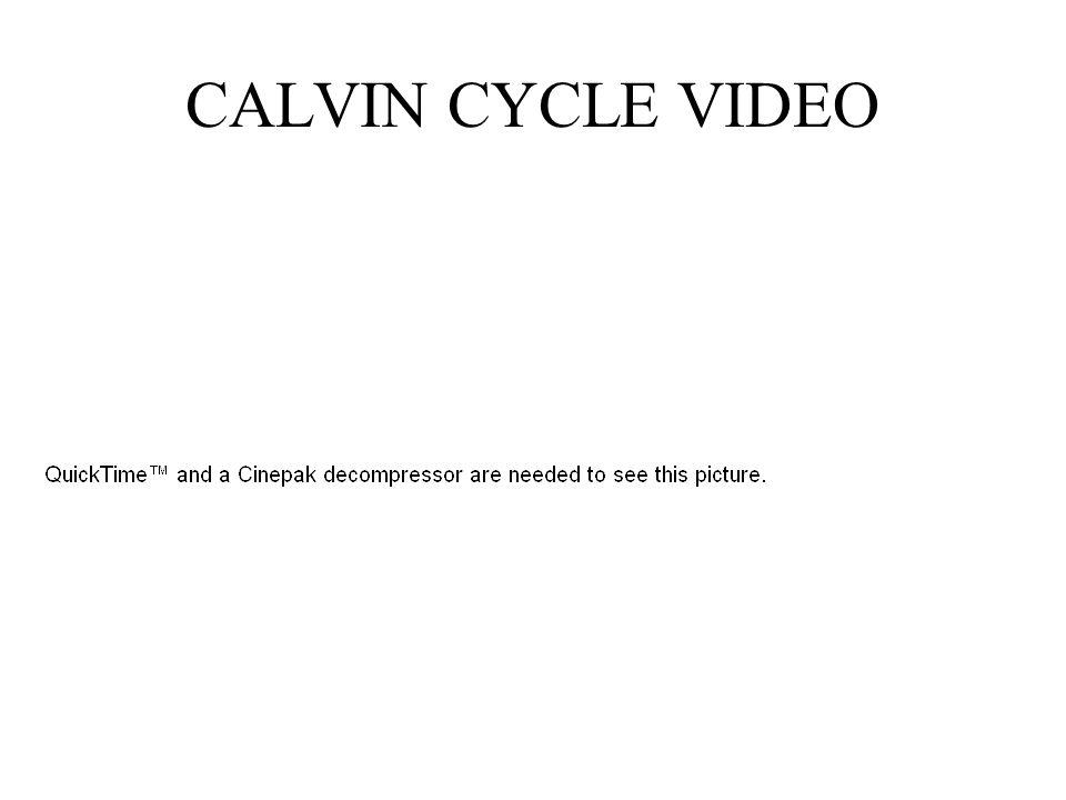 CALVIN CYCLE VIDEO