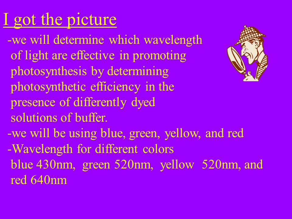I got the picture -we will determine which wavelength of light are effective in promoting photosynthesis by determining photosynthetic efficiency in the presence of differently dyed solutions of buffer.