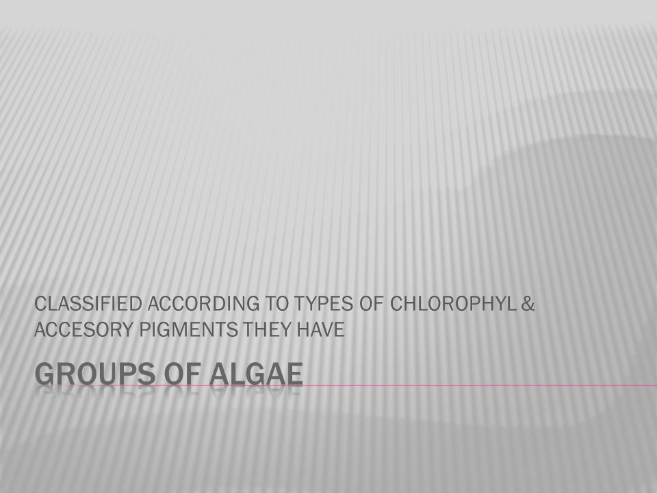 CLASSIFIED ACCORDING TO TYPES OF CHLOROPHYL & ACCESORY PIGMENTS THEY HAVE