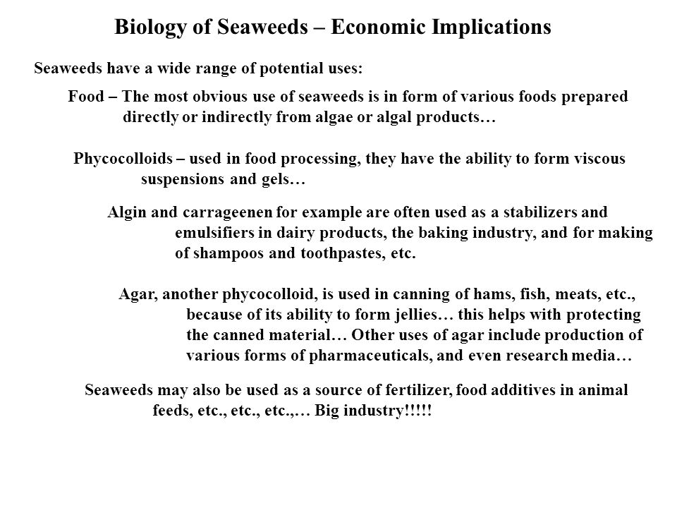 Biology of Seaweeds – Economic Implications Seaweeds have a wide range of potential uses: Food – The most obvious use of seaweeds is in form of various foods prepared directly or indirectly from algae or algal products… Phycocolloids – used in food processing, they have the ability to form viscous suspensions and gels… Algin and carrageenen for example are often used as a stabilizers and emulsifiers in dairy products, the baking industry, and for making of shampoos and toothpastes, etc.