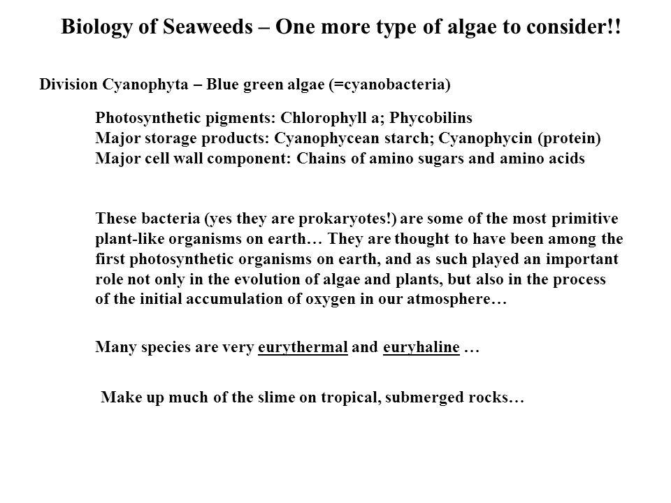 Biology of Seaweeds – One more type of algae to consider!.