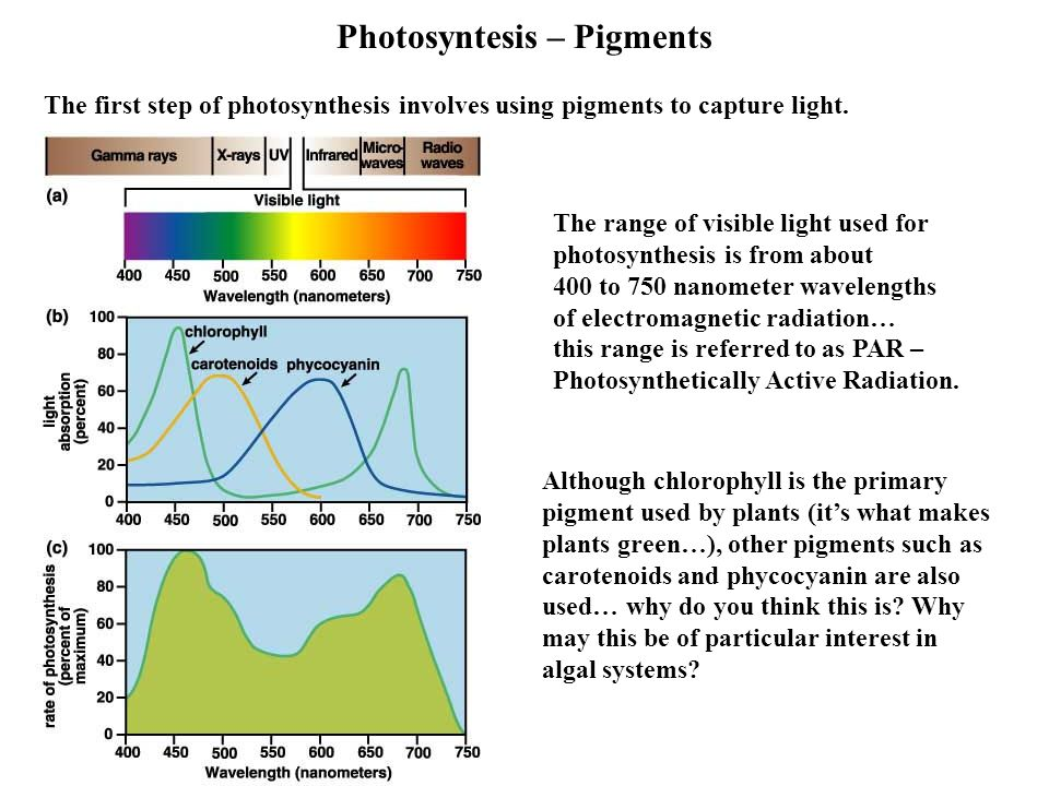 Photosyntesis – Pigments The first step of photosynthesis involves using pigments to capture light.