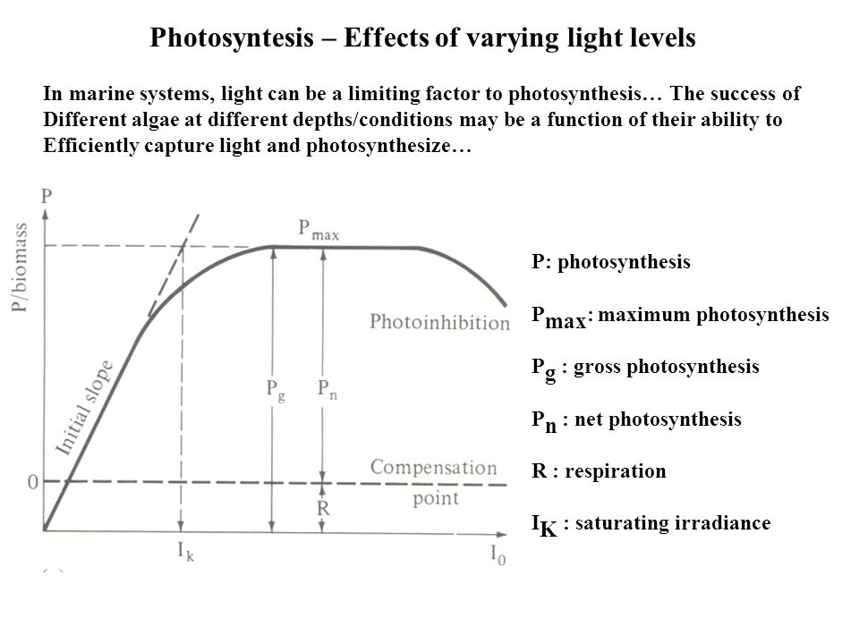 Photosyntesis – Effects of varying light levels P: photosynthesis P max : maximum photosynthesis P g : gross photosynthesis P n : net photosynthesis R : respiration I K : saturating irradiance In marine systems, light can be a limiting factor to photosynthesis… The success of Different algae at different depths/conditions may be a function of their ability to Efficiently capture light and photosynthesize…