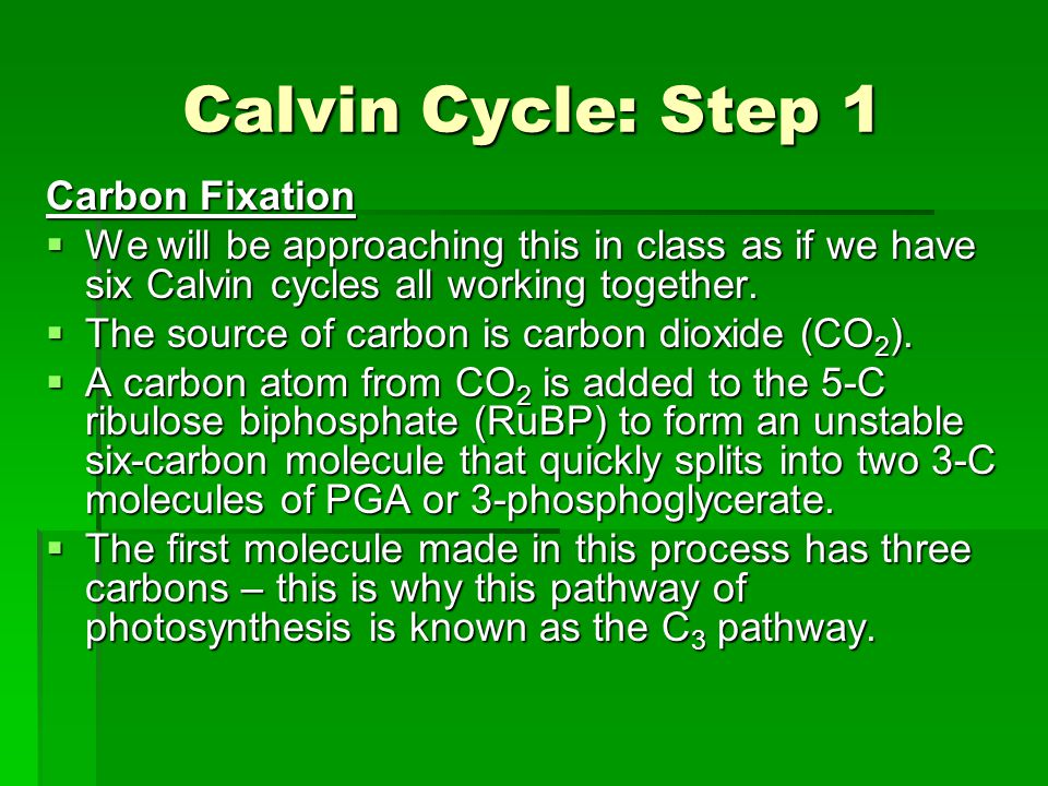 Calvin Cycle: Step 1 Carbon Fixation  We will be approaching this in class as if we have six Calvin cycles all working together.  The source of carb