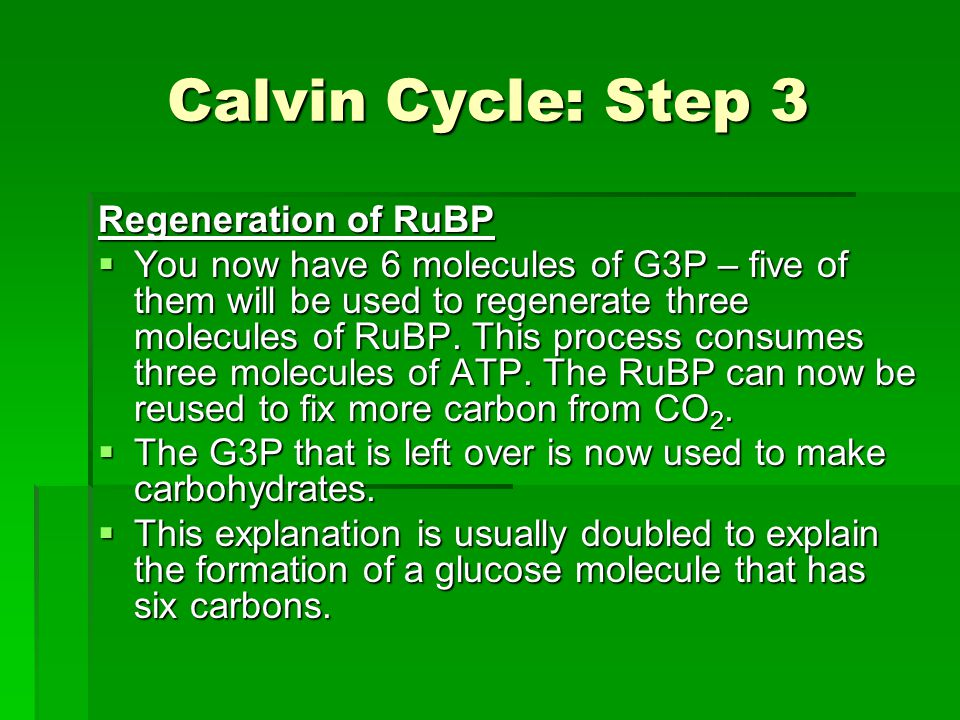Calvin Cycle: Step 3 Regeneration of RuBP  You now have 6 molecules of G3P – five of them will be used to regenerate three molecules of RuBP.