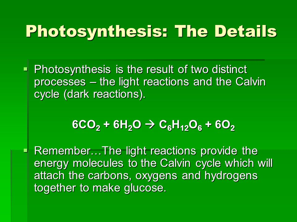 Photosynthesis: The Details  Photosynthesis is the result of two distinct processes – the light reactions and the Calvin cycle (dark reactions).