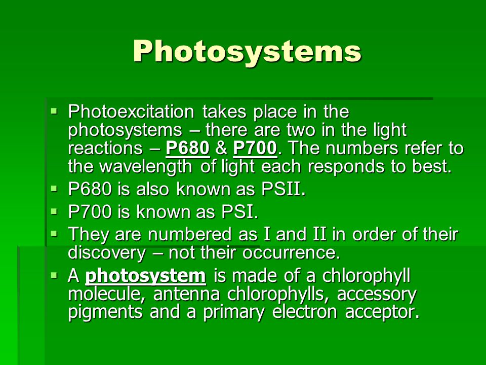 Photosystems  Photoexcitation takes place in the photosystems – there are two in the light reactions – P680 & P700.
