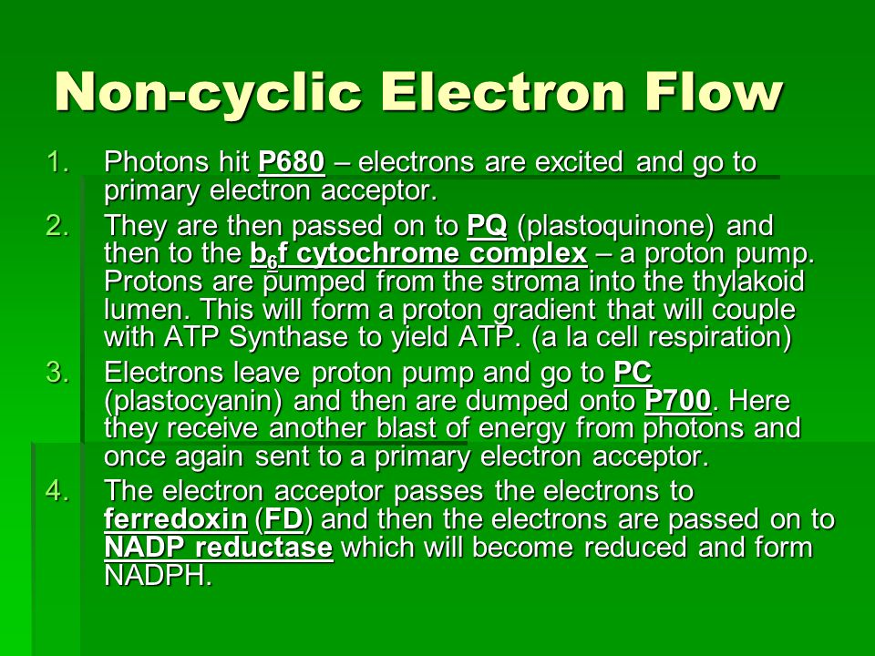 Non-cyclic Electron Flow 1.Photons hit P680 – electrons are excited and go to primary electron acceptor. 2.They are then passed on to PQ (plastoquinon