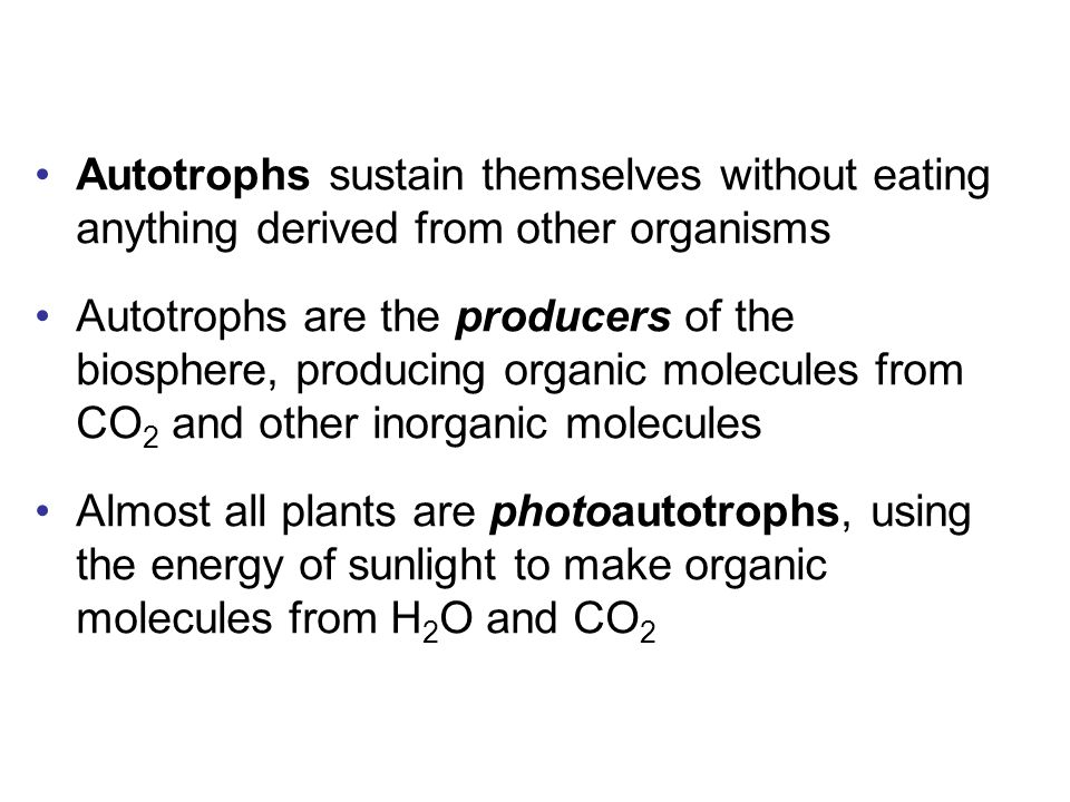 Autotrophs sustain themselves without eating anything derived from other organisms Autotrophs are the producers of the biosphere, producing organic molecules from CO 2 and other inorganic molecules Almost all plants are photoautotrophs, using the energy of sunlight to make organic molecules from H 2 O and CO 2