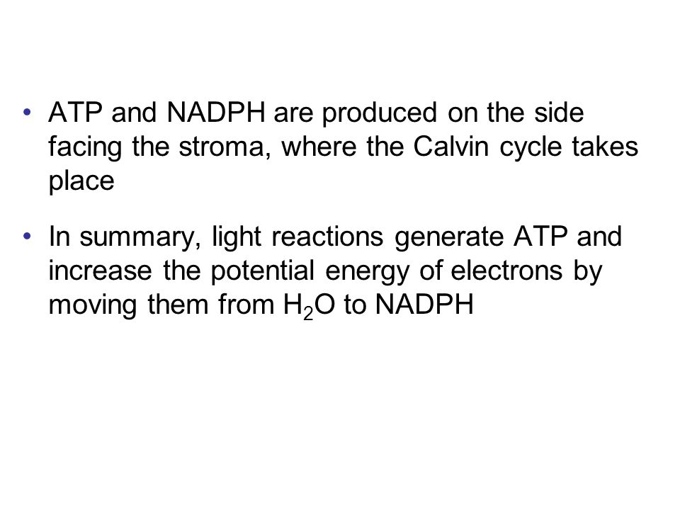 ATP and NADPH are produced on the side facing the stroma, where the Calvin cycle takes place In summary, light reactions generate ATP and increase the potential energy of electrons by moving them from H 2 O to NADPH