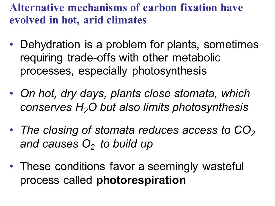 Alternative mechanisms of carbon fixation have evolved in hot, arid climates Dehydration is a problem for plants, sometimes requiring trade-offs with other metabolic processes, especially photosynthesis On hot, dry days, plants close stomata, which conserves H 2 O but also limits photosynthesis The closing of stomata reduces access to CO 2 and causes O 2 to build up These conditions favor a seemingly wasteful process called photorespiration