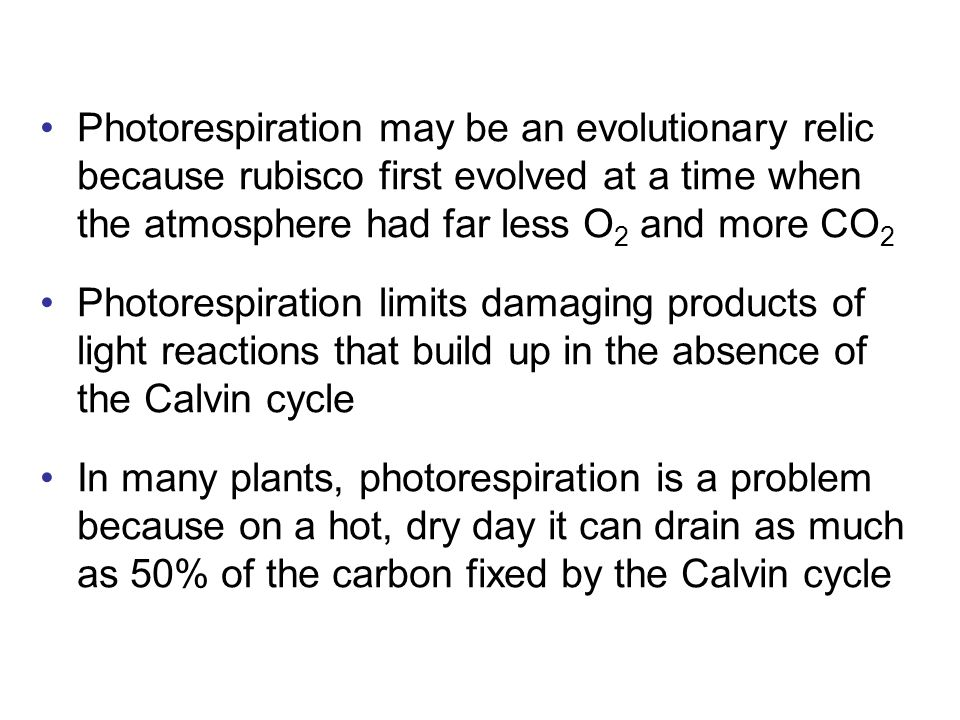 Photorespiration may be an evolutionary relic because rubisco first evolved at a time when the atmosphere had far less O 2 and more CO 2 Photorespiration limits damaging products of light reactions that build up in the absence of the Calvin cycle In many plants, photorespiration is a problem because on a hot, dry day it can drain as much as 50% of the carbon fixed by the Calvin cycle