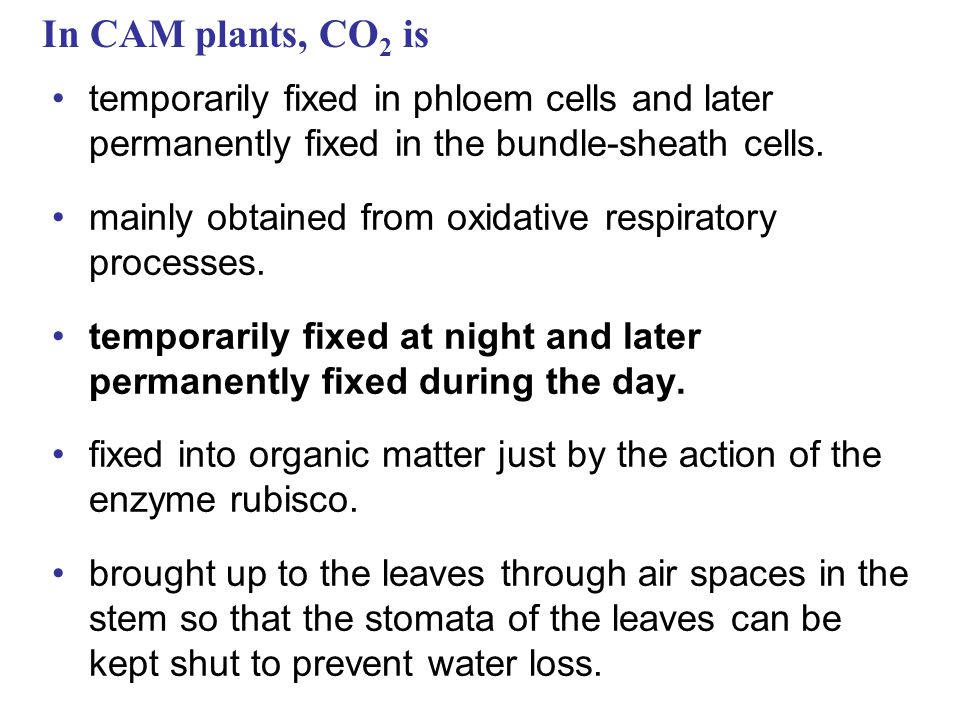 In CAM plants, CO 2 is temporarily fixed in phloem cells and later permanently fixed in the bundle-sheath cells.