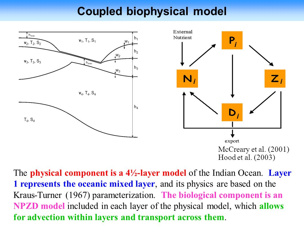 Coupled biophysical model The physical component is a 4½-layer model of the Indian Ocean.