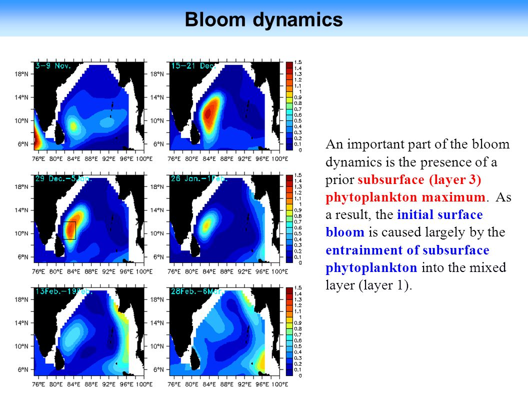 Bloom dynamics An important part of the bloom dynamics is the presence of a prior subsurface (layer 3) phytoplankton maximum.