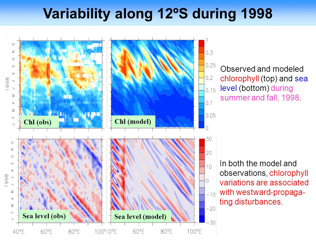 Variability along 12ºS during 1998 Observed and modeled chlorophyll (top) and sea level (bottom) during summer and fall, 1998.