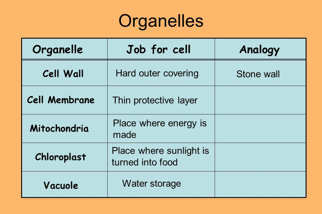 Plant Cells A plant is made up of many cells that have special characteristics that make them rigid (stiff) and able to make their own food.
