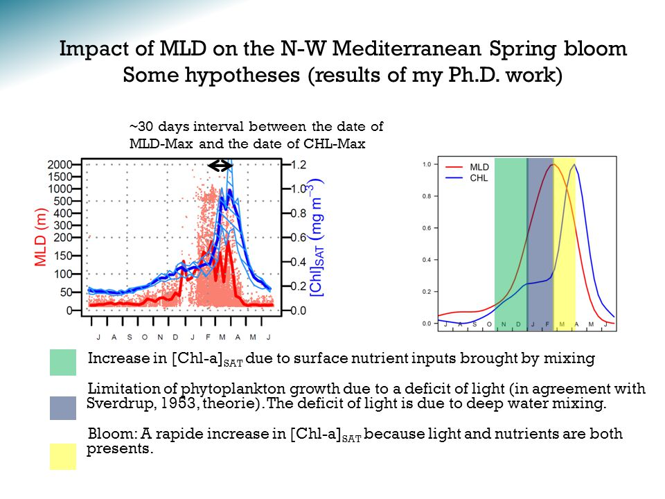 Impact of MLD on the N-W Mediterranean Spring bloom Some hypotheses (results of my Ph.D.