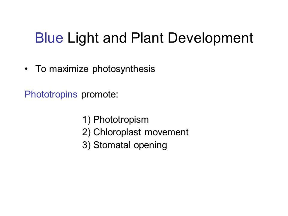 Blue Light and Plant Development To maximize photosynthesis Phototropins promote: 1) Phototropism 2) Chloroplast movement 3) Stomatal opening