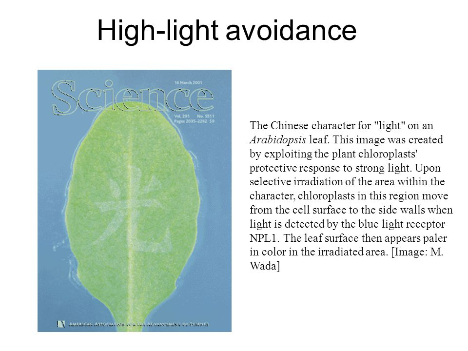 High-light avoidance The Chinese character for