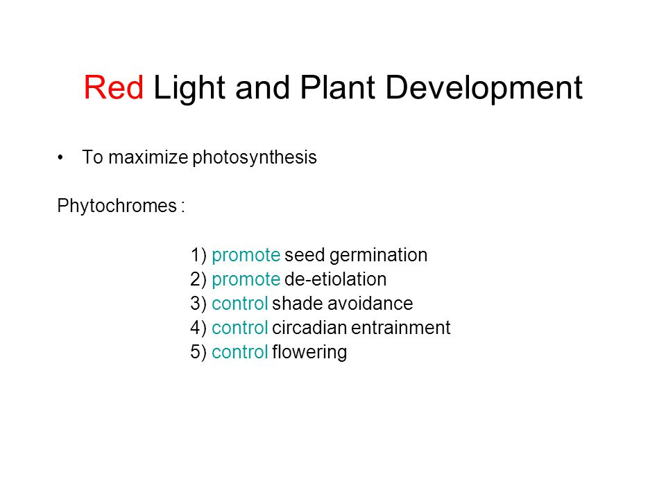 Red Light and Plant Development To maximize photosynthesis Phytochromes : 1) promote seed germination 2) promote de-etiolation 3) control shade avoida