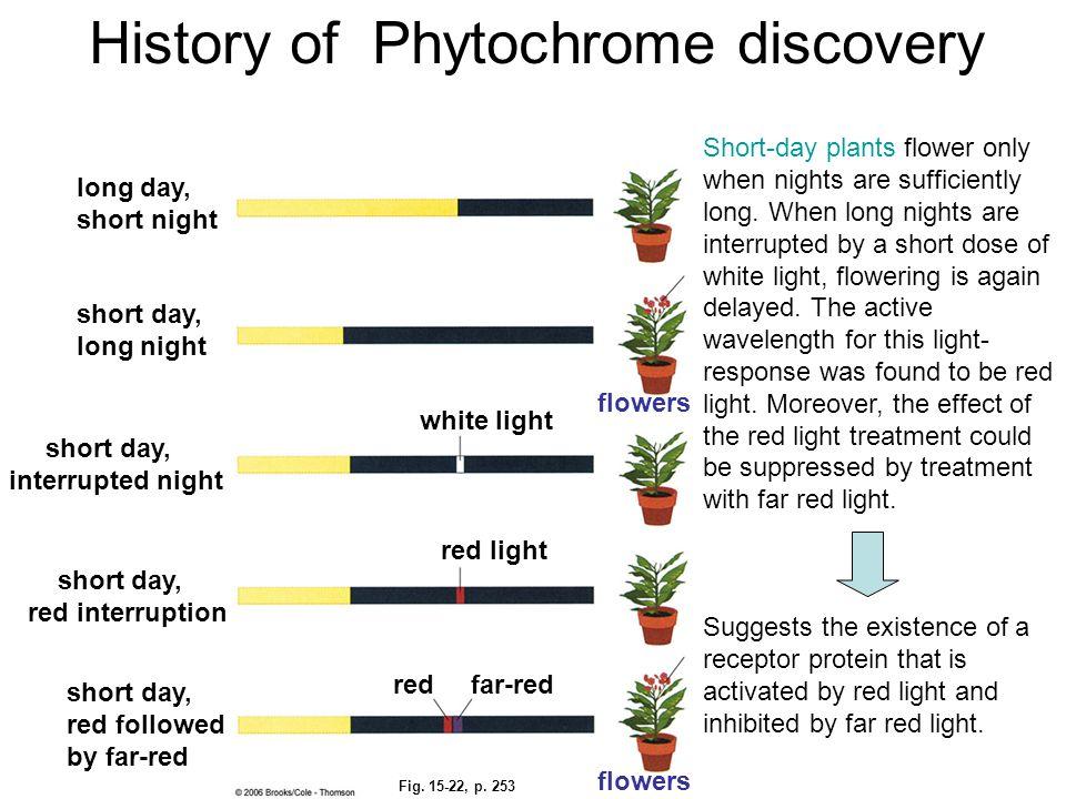 Fig. 15-22, p. 253 long day, short night short day, long night short day, interrupted night short day, red followed by far-red short day, red interrup